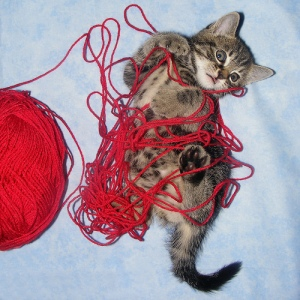 This kitten is better at knitting than I am.
